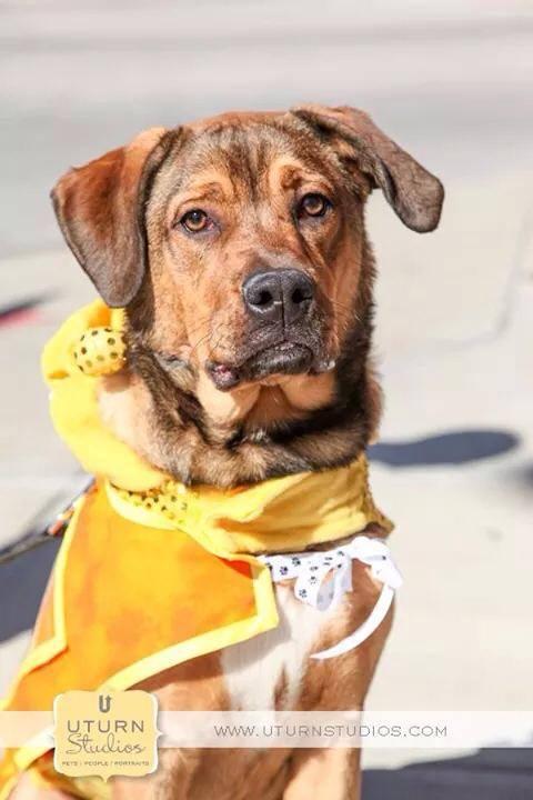 Pet Adoption: Hobbes needs a home