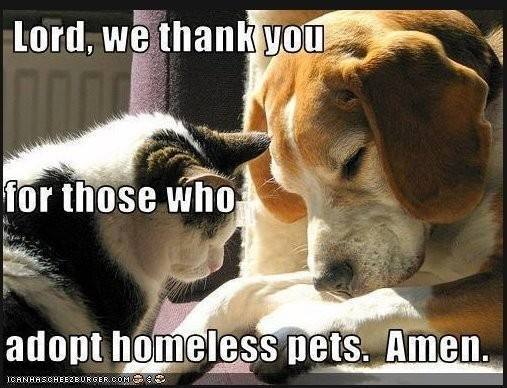 Pet Adoptions: There is a Silver Lining