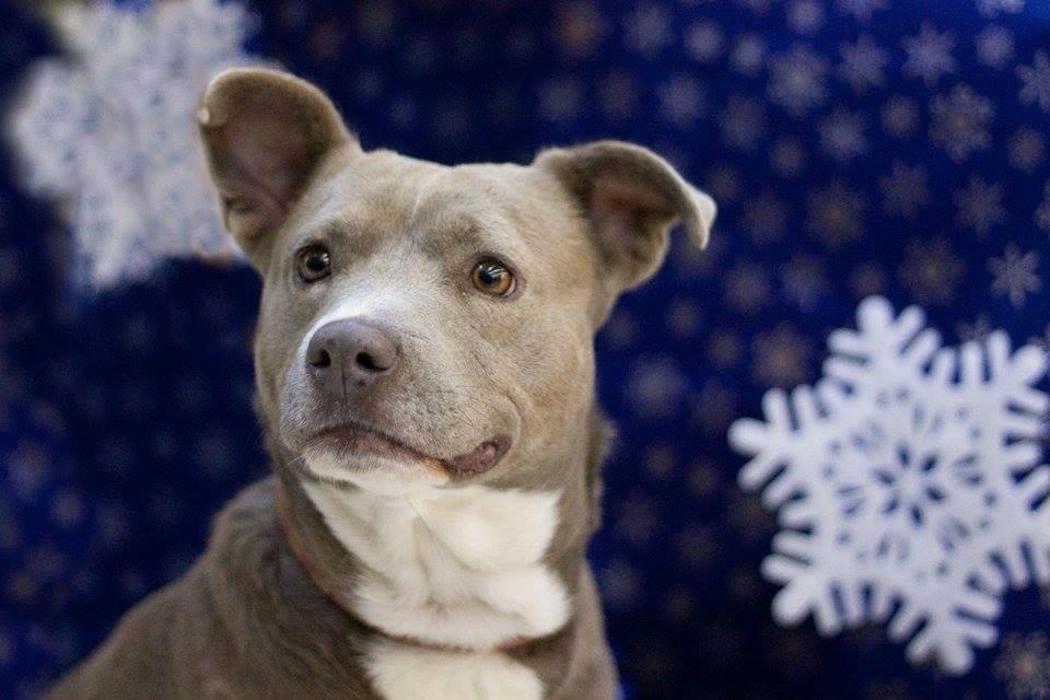 Pet Adoption: Mia needs a home